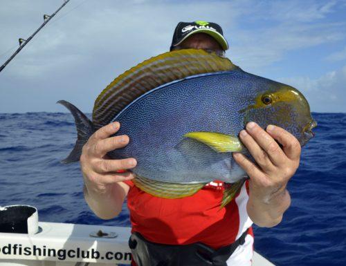 Poisson chirurgien pris en pêche a la palangrotte par André - www.rodfishingclub.com - Ile Rodrigues - Maurice - Océan Indien