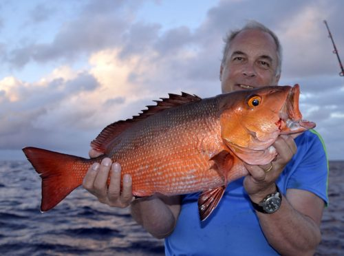 Red snapper on baiting by Jean Philippe - www.rodfishingclub.com - Rodrigues Island - Mauritius - Indian Ocean