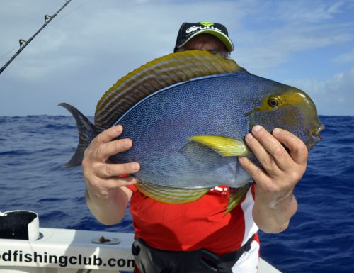 Surgeon fish by André on bottom fishing - www.rodfishingclub.com - Rodrigues Island - Mauritius - Indian Ocean