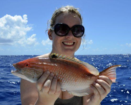 Un labridé pris en pêche a la palangrotte par Alanah - www.rodfishingclub.com - Ile Rodrigues - Maurice - Océan Indien