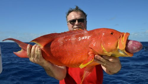Moontail Sea bass caught on baiting by Pierre - www.rodfishingclub.com - Rodrigues Island - Mauritius - Indian Ocean