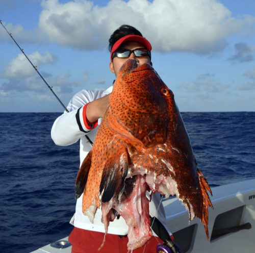 Head of red corail trout on slow jigging - www.rodfishingclub.com - Rodrigues - Mauritius - Indian Ocean