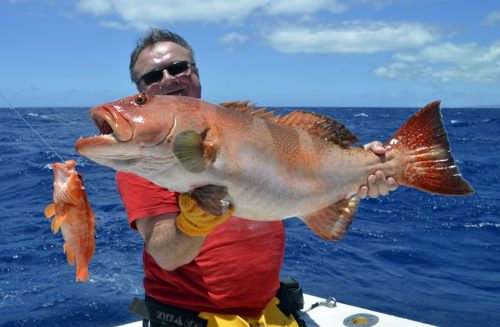 Nice red corail trout by Pierre on baiting - www.rodfishingclub.com - Rodrigues Island - Mauritius - Indian Ocean