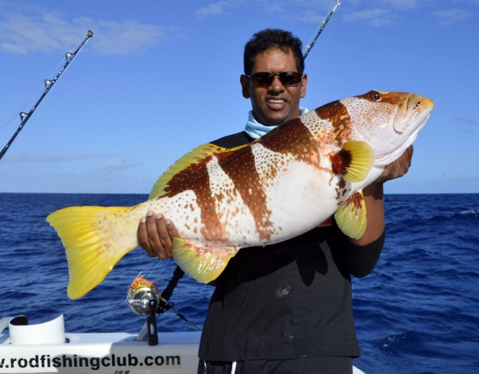 Saddle grouper (plectopromus laevis) on jigging - www.rodfishingclub.com - Rodrigues - Mauritius - Indian Ocean