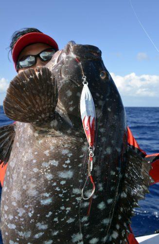 Epinephelus multinotatus ou mérou plat en slow jigging - www.rodfishingclub.com - Rodrigues - Maurice - Océan Indien