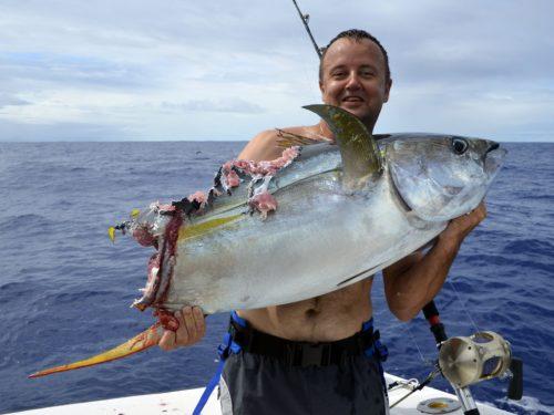 Thon jaune coupé par un requin en pêche a la traîne - www.rodfishingclub.com -Rodrigues - Maurice - Océan Indien