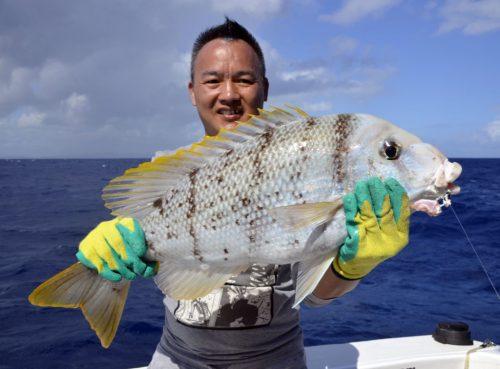 gymnocranius griseus - www.rodfishingclub.com - Rodrigues - Maurice - Océan Indien