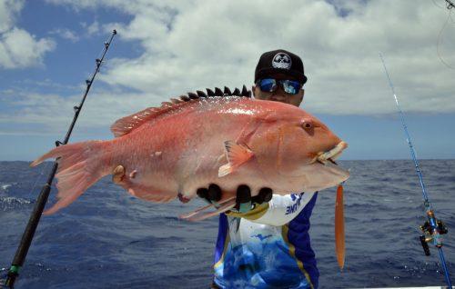 Magnifique poisson perroquet pris en slow jigging - www.rodfishingclub.com - Rodrigues - Maurice - Océan Indien