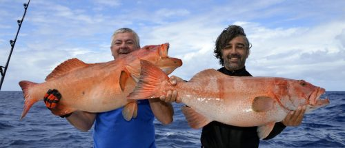 Double strike of red corail trout on jigging - www.rodfishingclub.com - Rodrigues - Mauritius - Indian Ocean