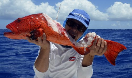 Red corail trout cut by shark on jigging by Denis - www.rodfishingclub.com - Rodrigues Island - Mauritius - Indian Ocean