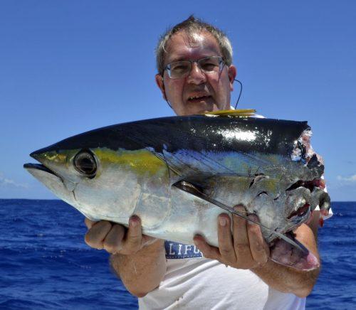 Thon jaune coupé par un requin en pêche a la traîne - www.rodfishingclub.com - Rodrigues - Maurice - Océan Indien