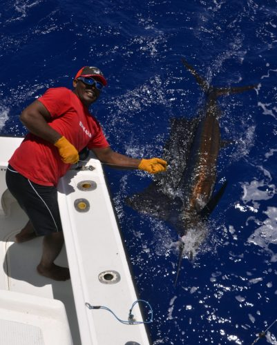Voilier de 50kg en pêche a la traîne - www.rodfishingclub.com - Rodrigues - Maurice - Océan Indien