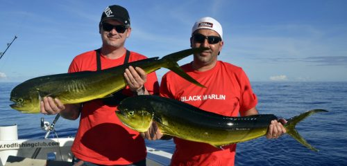 Dorades en pêche a la traîne - www.rodfishingclub.com - Rodrigues - Maurice - Océan Indien