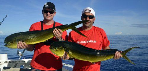 Dorados on trolling - www.rodfishingclub.com - Rodrigues - Mauritius - Indian Ocean