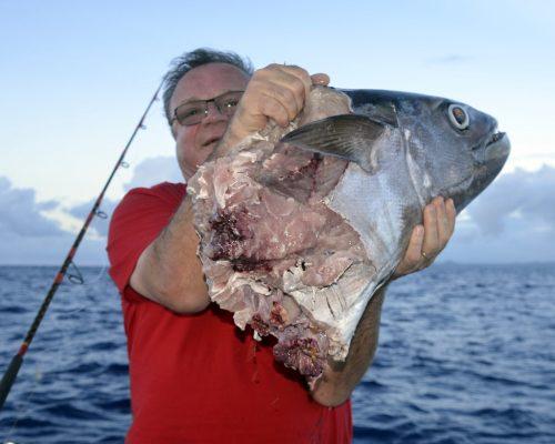 Thon dents de chien coupé par un requin - www.rodfishingclub.com - Rodrigues - Maurice - Océan Indien