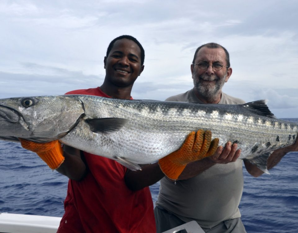 Big barracuda on baiting - www.rodfishingclub.com - Rodrigues - Mauritius - Indian Ocean