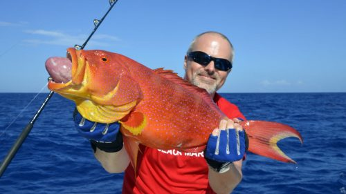 Moontail sea bass on baiting - www.rodfishingclub.com - Rodrigues - Mauritius - Indian Ocean