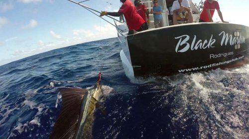 Sailfish on the leader on trolling - www.rodfishingclub.com - Rodrigues - Mauritius - Indian Ocean