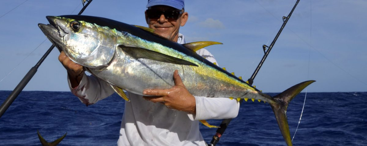 Thon jaune en pêche a la traine par Denis - www.rodfishingclub.com - Rodrigues - Maurice - Océan Indien