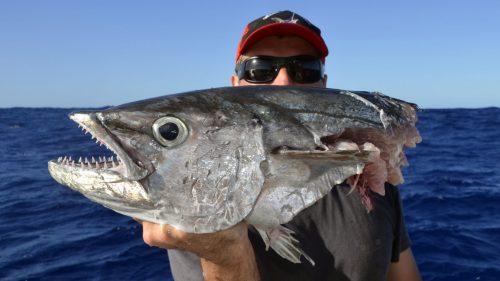 Doggy cut by shark on jigging - www.rodfishingclub.com - Rodrigues - Mauritius - Indian Ocean