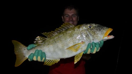 Emperor on baiting - www.rodfishingclub.com - Rodrigues - Mauritius - Indian Ocean