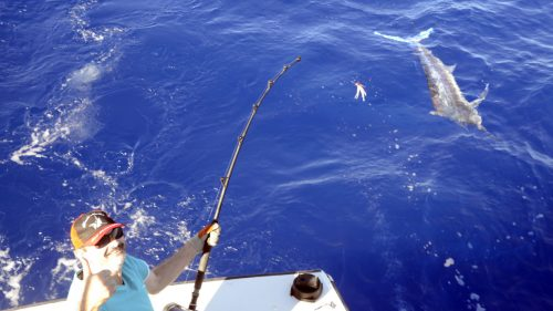 Black marlin on trolling by Bertrand
