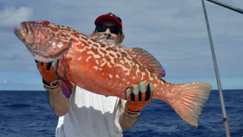 Red corail trout on jigging