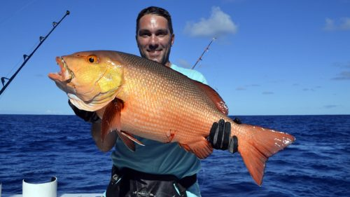 Red snapper on baiting by Gilles
