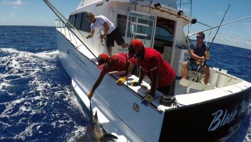 Blue marlin released on trolling - www.rodfishingclub.com - Rodrigues - Mauritius - Indian Ocean