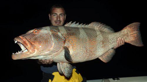 Mérou babone en peche a l appat de nuit - www.rodfishingclub.com - Rodrigues - Maurice - Ocean Indien