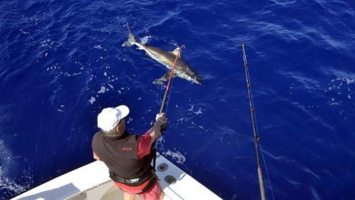 Requin en peche a la traine en heavy spinning - www.rodfishingclub.com - Rodrigues - Maurice - Ocean Indien