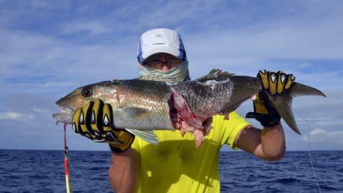 Jobfish on jigging cut by shark - www.rodfishingclub.com - Rodrigues - Mauritius - Indian Ocean