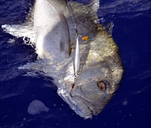 Giant trevally on slow jigging - www.rodfishingclub.com - Rodrigues - Mauritius - Indian Ocean