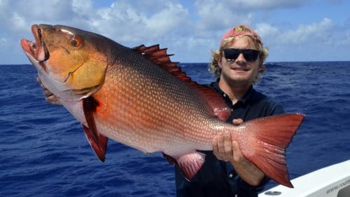 Red snapper on baiting by Arthur - www.rodfishingclub.com - Rodrigues - Mauritius - Indian Ocean