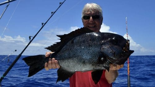 Seabream on baiting - www.rodfishingclub.com - Rodrigues - Mauritius - Indian Ocean