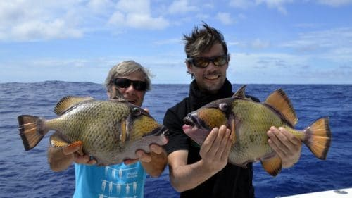 Triggerfish on baiting - www.rodfishingclub.com - Rodrigues - Mauritius - Indian Ocean
