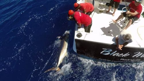 Blue marlin on leader - www.rodfishingclub.com - Rodrigues - Mauritius - Indian Ocean