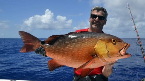 Red snapper on baiting - www.rodfishingclub.com - Rodrigues - Mauritius - Indian Ocean