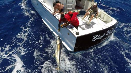 Small blue marlin released on trolling - www.rodfishingclub.com - Rodrigues - Mauritius - Indian Ocean
