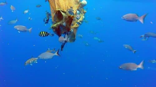Sous une epave derivante - www.rodfishingclub.com - Rodrigues - Maurice - Ocean Indien