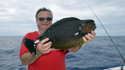 Surgeon fish on baiting by Pierre - www.rodfishingclub.com - Rodrigues - Mauritius - Indian Ocean