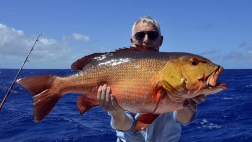 Red snapper on baiting by Bertrand - www.rodfishingclub.com - Rodrigues - Mauritius - Indian Ocean