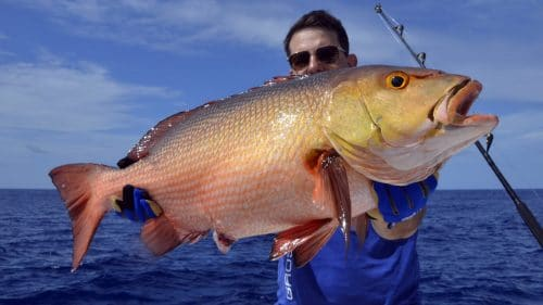 Red snapper on baiting by xavier - www.rodfishingclub.com - Rodrigues - Mauritius - Indian Ocean
