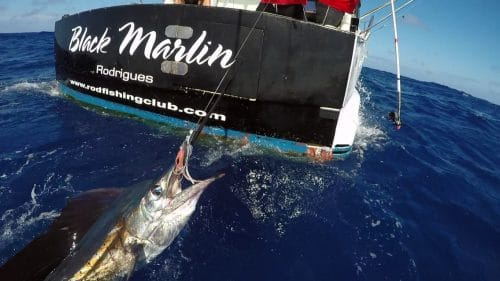 Voilier pris en peche a la traine - www.rodfishingclub.com - Rodrigues - Maurice - Ocean Indien