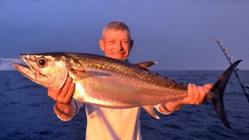 Doggy on baiting by Denis - www.rodfishingclub.com - Rodrigues - Mauritius - Indian Ocean