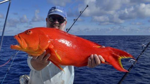 Moontail sea bass on baiting - www.rodfishingclub.com - Rodrigues - Mauritius - Indian Ocean