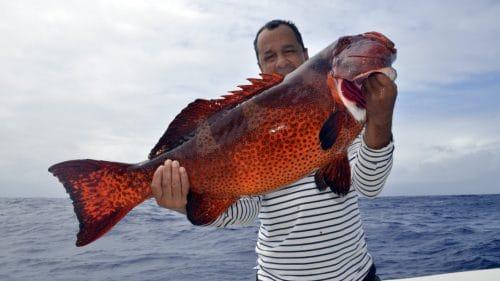 Beau-merou-babone-en-peche-au-jig-www.rodfishingclub.com-Rodrigues-Maurice-Océan-Indien