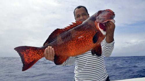 Good red corail trout on jigging - www.rodfishingclub.com - Rodrigues - Mauritius - Indian Ocean