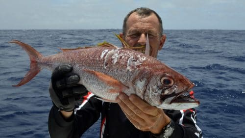 Snapper on jigging - www.rodfishingclub.com - Rodrigues - Mauritius - Indian Ocean