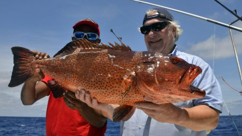 Big grouper on baiting - www.rodfishingclub.com - Rodrigues - Mauritius - Indian Ocean